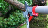 Tree Pruning Services in Atlanta GA