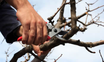 Tree Pruning in Atlanta GA Tree Pruning Services in Atlanta GA Quality Tree Pruning in Atlanta GA