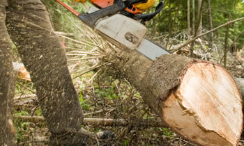 Tree Service in Atlanta GA Tree Service Estimates in Atlanta GA Tree Service Quotes in Atlanta GA Tree Service Professionals in Atlanta GA